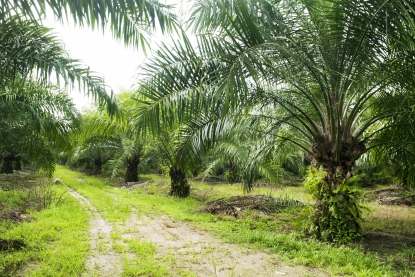 Less palm oil from Indonesia